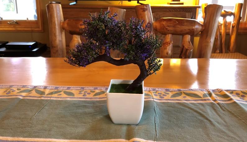 plant 1 (2)