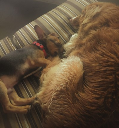 puppies - Buster sleeping with Daisy (2)