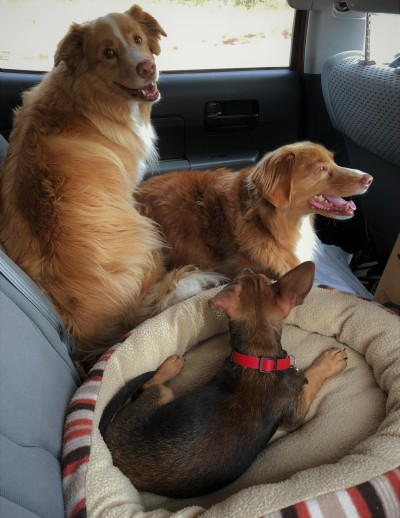 puppies - riding in car (2)